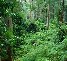 Ferny Forest - Mill Creek NSW by Bev Woodman