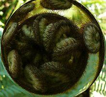 Fern Bubble by Sue Cotton