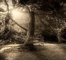 I Wish You Were Here by Peter Kurdulija