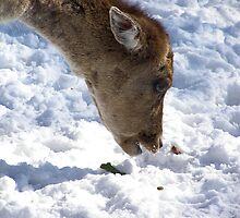 mmm snow by Cheryl Dunning