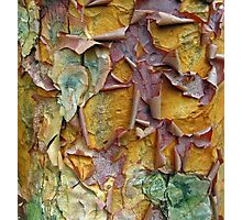 Paper Bark Abstract 2 Photographic Print