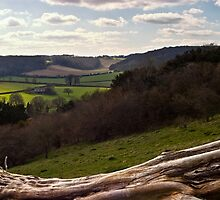 Spring Countryside, Buckinghamshire by Paul Davey
