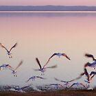 Take Flight by JadeHarmony