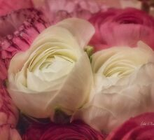 Nestled in pink by Celeste Mookherjee