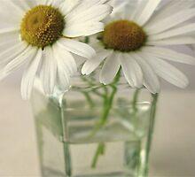 Daisies in a jar (Landscape) by AlisonBurford