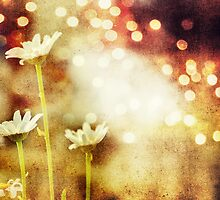 bokeh magic by bohemiancouture