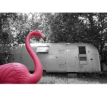 Pink Flamingo Photographic Print