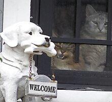 Beware of the CAT by Terri Chandler