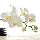 Balance and Orchid by ntd0277