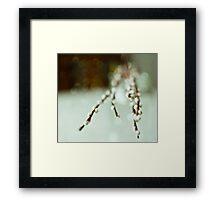 Spring Kittens Framed Print