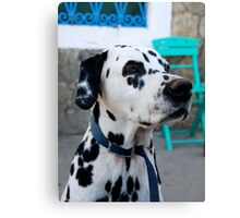 Greek Dalmation Canvas Print