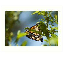 Butterfly Style Art Print