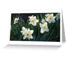 7 ABSTRACT DAFFODILS Greeting Card
