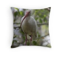 Florida Everglades White Ibis BiIrd Throw Pillow