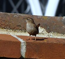 A Wren by Sharon Perrett