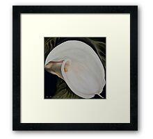 "Calla Lily ""Black Swan"" Framed Print"