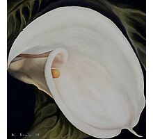 "Calla Lily ""Black Swan"" Photographic Print"