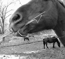 horse sense by Kira Robson