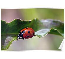Ladybug Bridge Poster