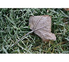 Frosted leaf, winter 2009 Photographic Print