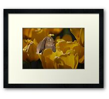 The Tulip Patch Framed Print
