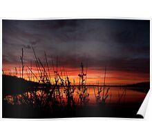 Australian Sunrise over reeds Poster