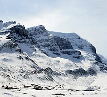 Icefields  by Tiffany Vest