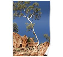 Ormiston Gorge, NT Poster