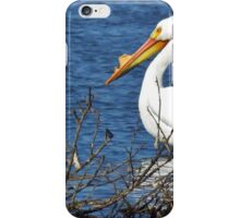 Pelican with Mohawk Hairdo  iPhone Case/Skin