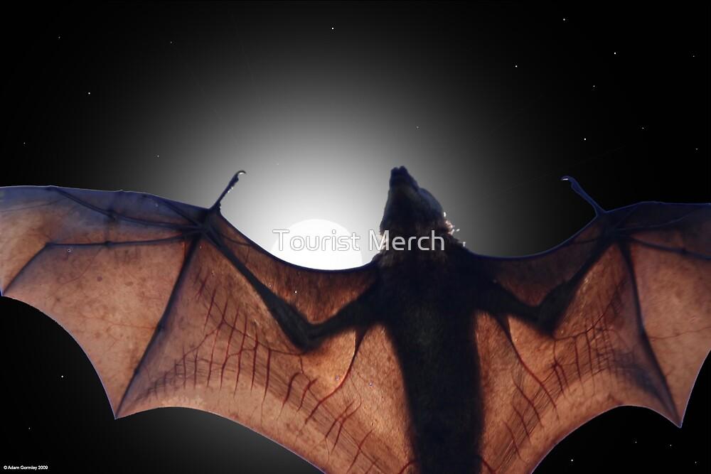 Flying Fox by Adam Gormley