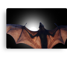 Flying Fox Canvas Print