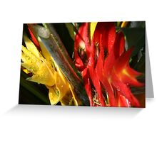 Tropic Color #2 Greeting Card