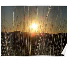 Long-grassSunset  Poster