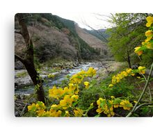 Mt. Mitake Valley, Japan Canvas Print