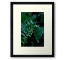 baby fern Framed Print