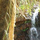 Molly Springs bio-diversity by mickmci