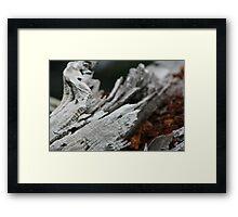 crimson bark 0.2 Framed Print