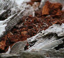 crimson bark 0.3 by filthy-english
