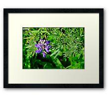 California Wildflowers – Marin Headlands Framed Print
