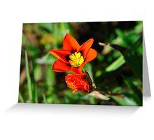 California Wildflowers • Marin Headlands  •  Series Greeting Card
