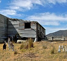 Outback Shearing Shed  by Steven  Agius