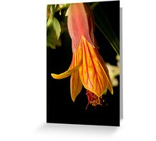 Beautiful flower portrait Greeting Card