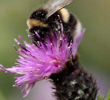 I prefer Pollen !! by AnnDixon