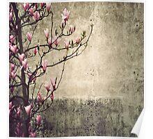 _ magnolia _ Poster