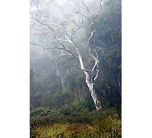 Eucalypt, Budawangs, NSW Photographic Print