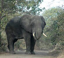 Big Bull by DUNCAN DAVIE