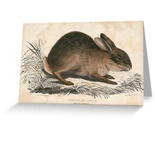 Chinese hare Greeting Card
