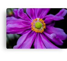 purple flower macro closeup Canvas Print