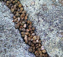 Organic by Kitsmumma