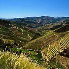 Rio Douro valley by elaintahra